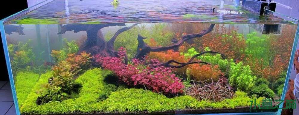 120cm荷兰式与德国式结合的水长沙虎鱼草造景 长沙龙鱼论坛 长沙龙鱼第28张