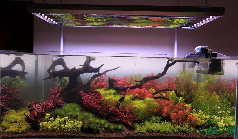 120cm荷兰式与德国式结合的水长沙虎鱼草造景 长沙龙鱼论坛 长沙龙鱼第31张