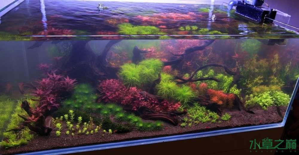 120cm荷兰式与德国式结合的水长沙虎鱼草造景 长沙龙鱼论坛 长沙龙鱼第34张