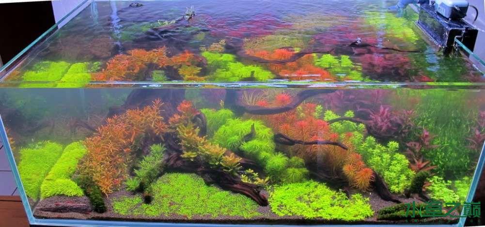 120cm荷兰式与德国式结合的水长沙虎鱼草造景 长沙龙鱼论坛 长沙龙鱼第45张