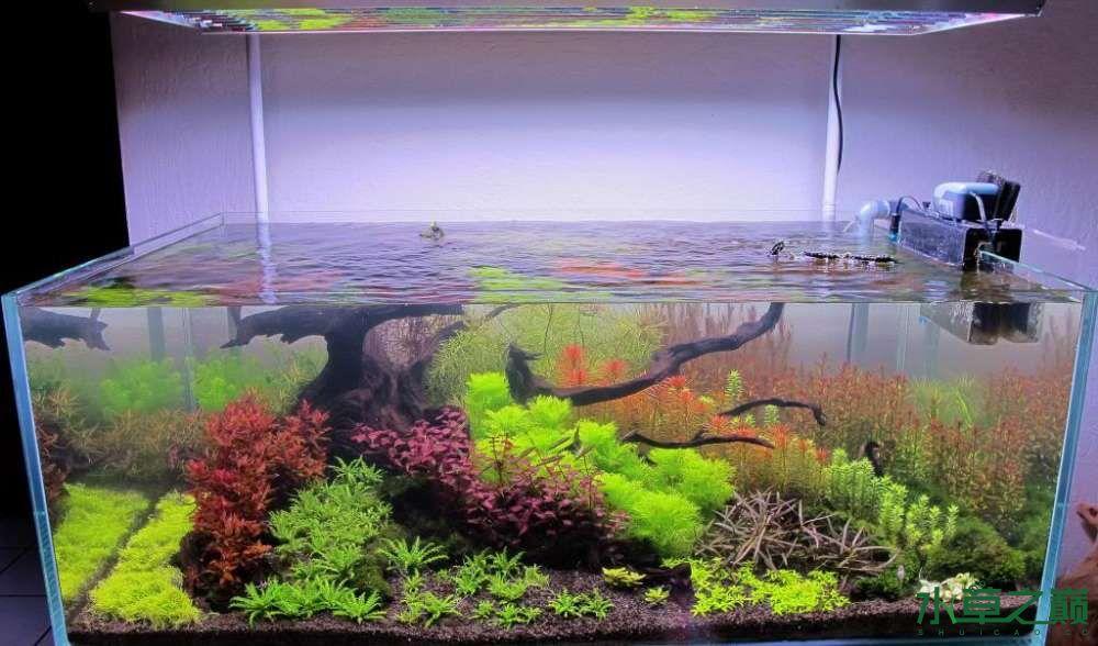 120cm荷兰式与德国式结合的水长沙虎鱼草造景 长沙龙鱼论坛 长沙龙鱼第50张