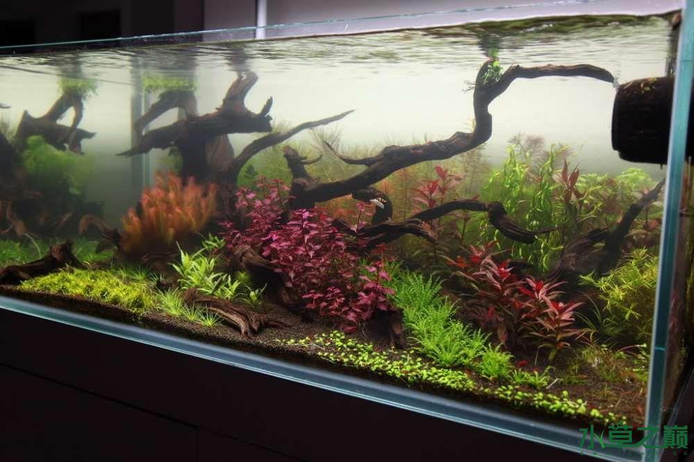 120cm荷兰式与德国式结合的水长沙虎鱼草造景 长沙龙鱼论坛 长沙龙鱼第63张
