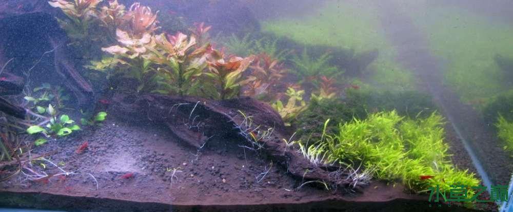 120cm荷兰式与德国式结合的水长沙虎鱼草造景 长沙龙鱼论坛 长沙龙鱼第79张
