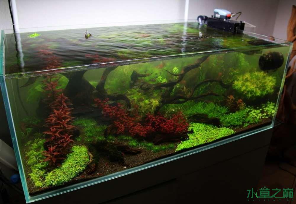 120cm荷兰式与德国式结合的水长沙虎鱼草造景 长沙龙鱼论坛 长沙龙鱼第80张