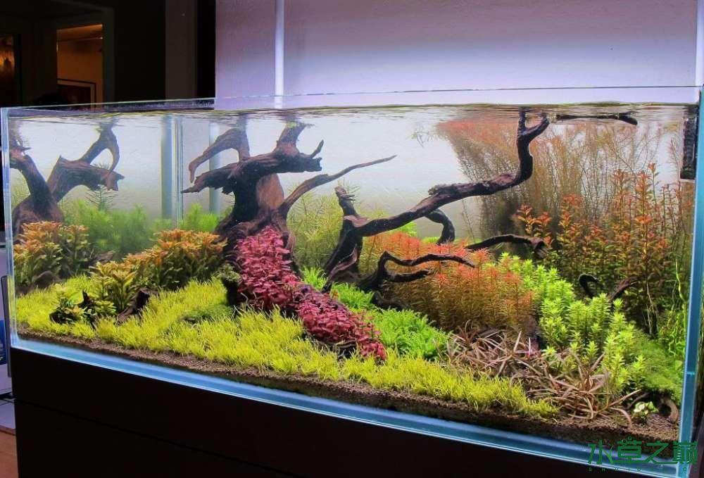 120cm荷兰式与德国式结合的水长沙虎鱼草造景 长沙龙鱼论坛 长沙龙鱼第92张