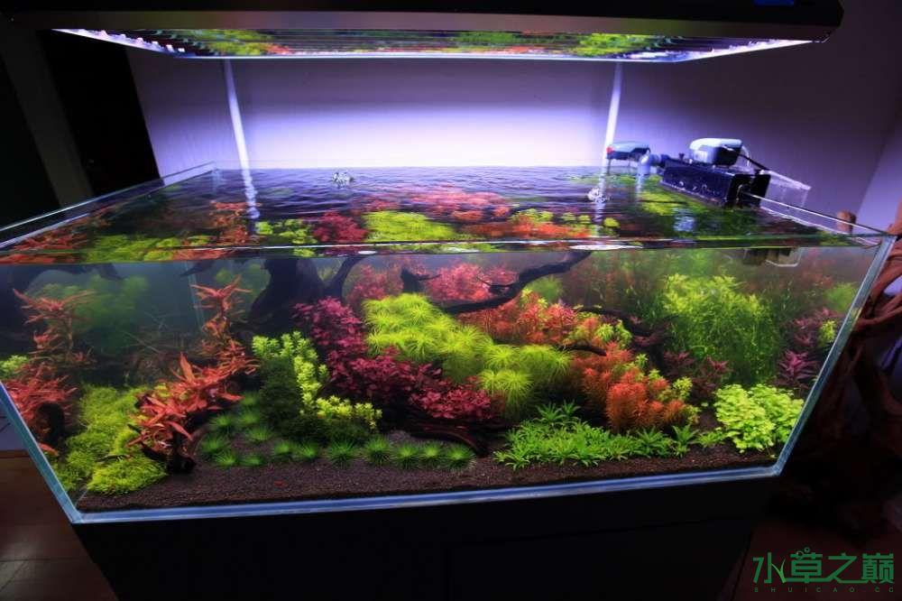 120cm荷兰式与德国式结合的水长沙虎鱼草造景 长沙龙鱼论坛 长沙龙鱼第100张