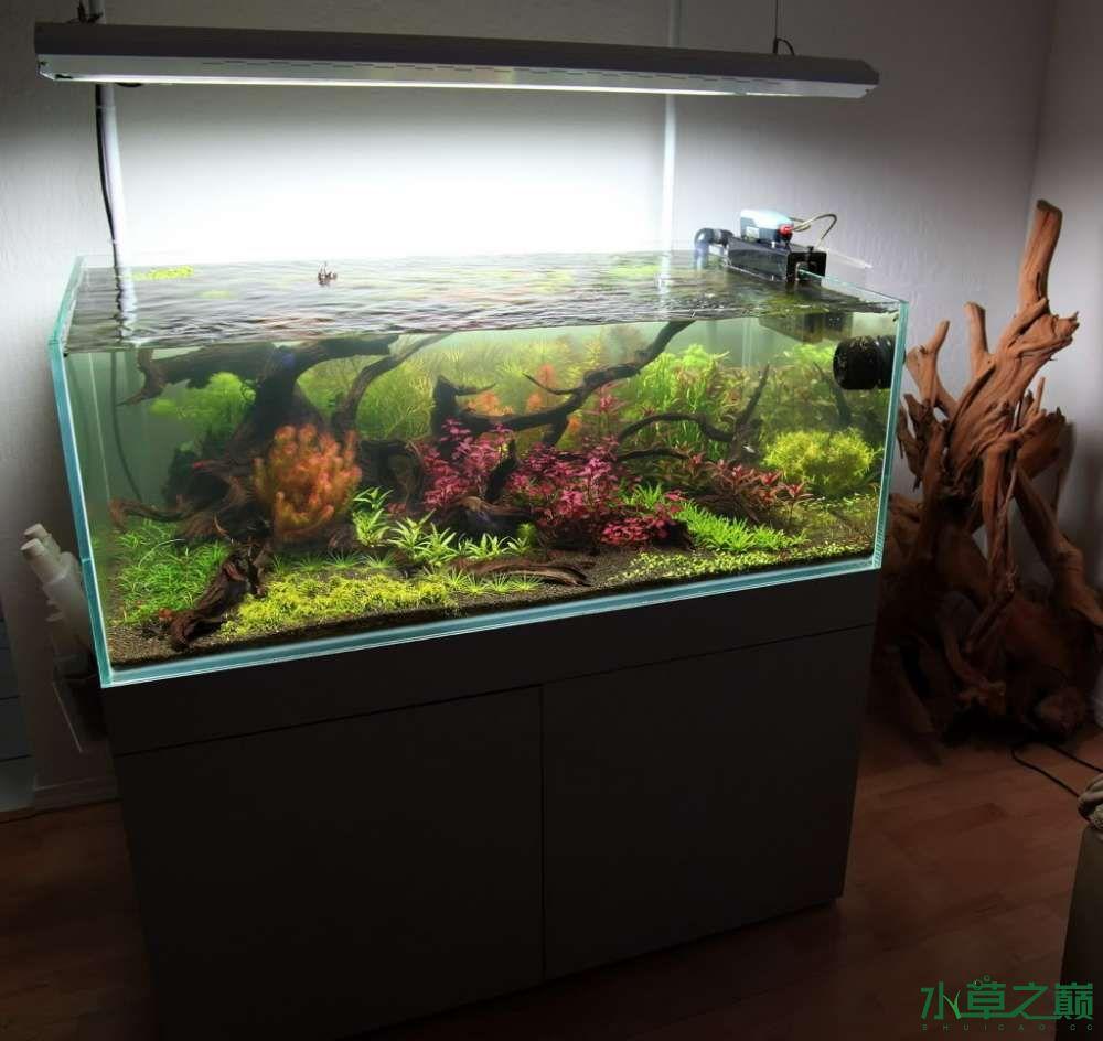 120cm荷兰式与德国式结合的水长沙虎鱼草造景 长沙龙鱼论坛 长沙龙鱼第110张