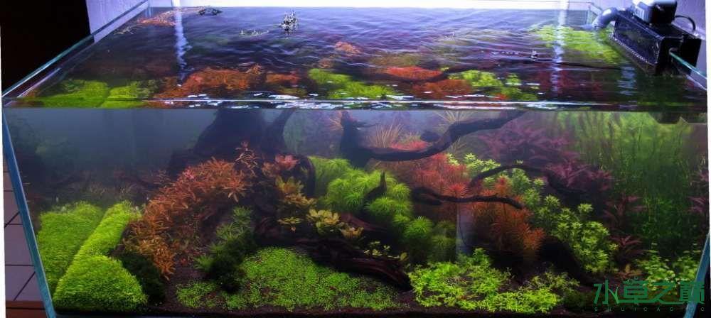 120cm荷兰式与德国式结合的水长沙虎鱼草造景 长沙龙鱼论坛 长沙龙鱼第116张