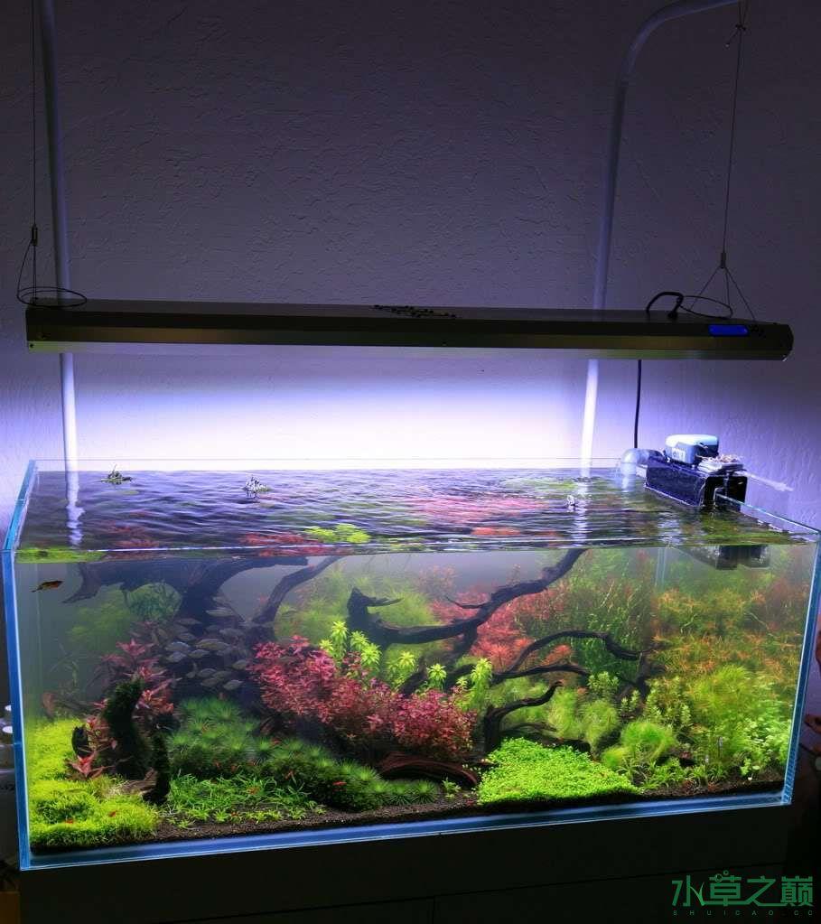 120cm荷兰式与德国式结合的水长沙虎鱼草造景 长沙龙鱼论坛 长沙龙鱼第125张