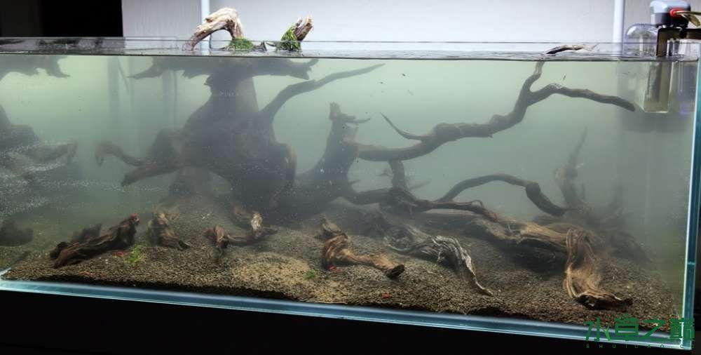 120cm荷兰式与德国式结合的水长沙虎鱼草造景 长沙龙鱼论坛 长沙龙鱼第161张