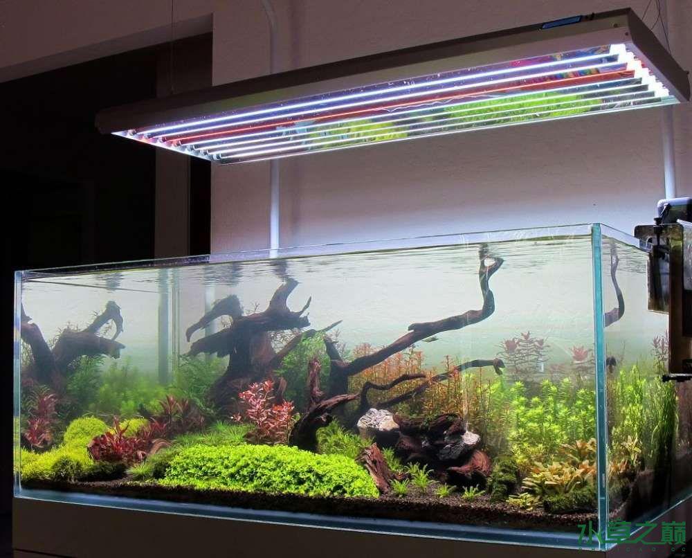 120cm荷兰式与德国式结合的水长沙虎鱼草造景 长沙龙鱼论坛 长沙龙鱼第165张