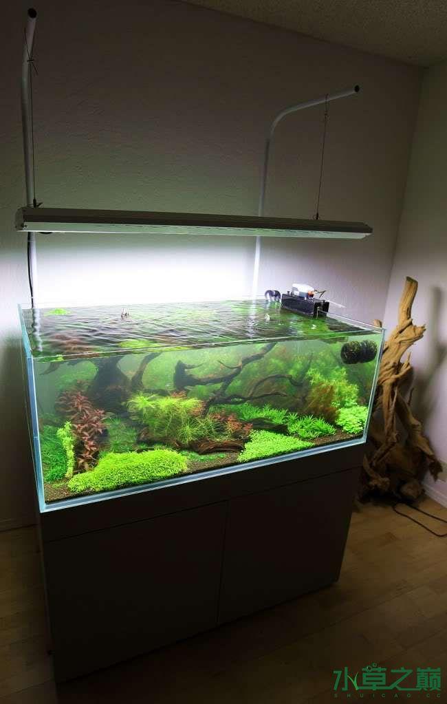 120cm荷兰式与德国式结合的水长沙虎鱼草造景 长沙龙鱼论坛 长沙龙鱼第169张
