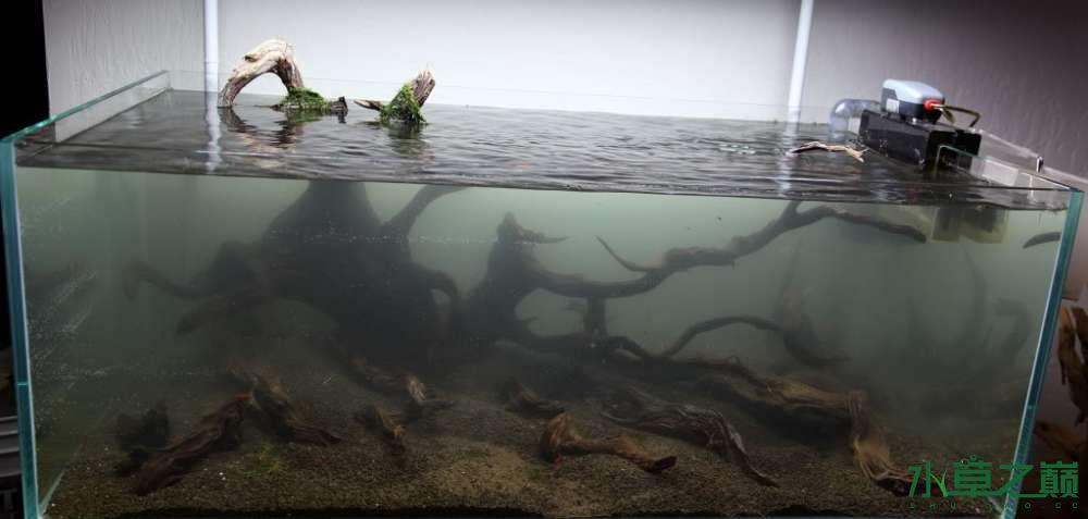 120cm荷兰式与德国式结合的水长沙虎鱼草造景 长沙龙鱼论坛 长沙龙鱼第176张