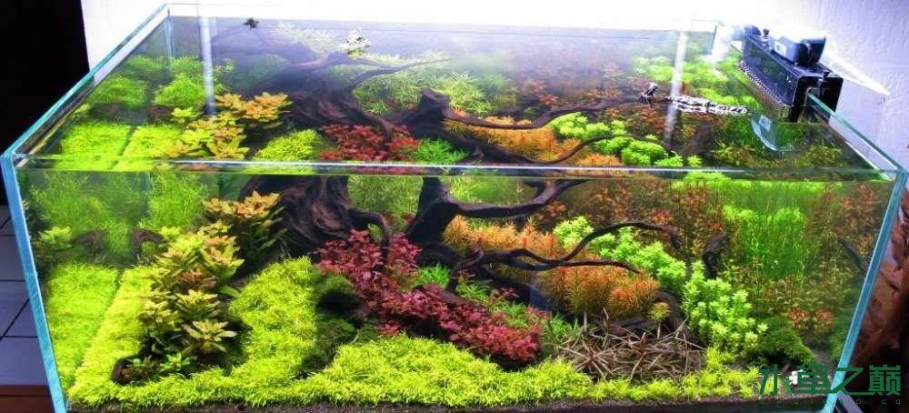 120cm荷兰式与德国式结合的水长沙虎鱼草造景 长沙龙鱼论坛 长沙龙鱼第184张