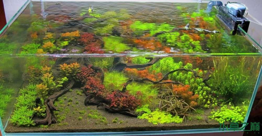 120cm荷兰式与德国式结合的水长沙虎鱼草造景 长沙龙鱼论坛 长沙龙鱼第195张