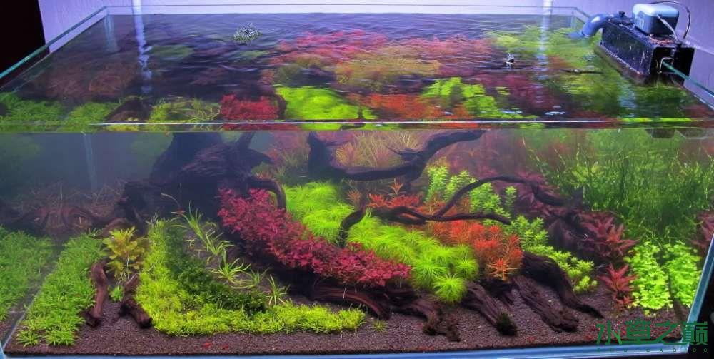 120cm荷兰式与德国式结合的水长沙虎鱼草造景 长沙龙鱼论坛 长沙龙鱼第223张