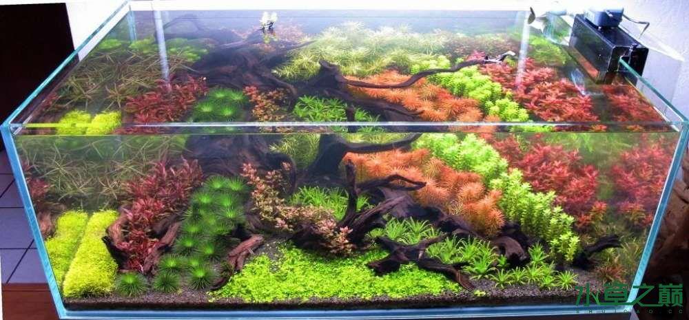 120cm荷兰式与德国式结合的水长沙虎鱼草造景 长沙龙鱼论坛 长沙龙鱼第224张