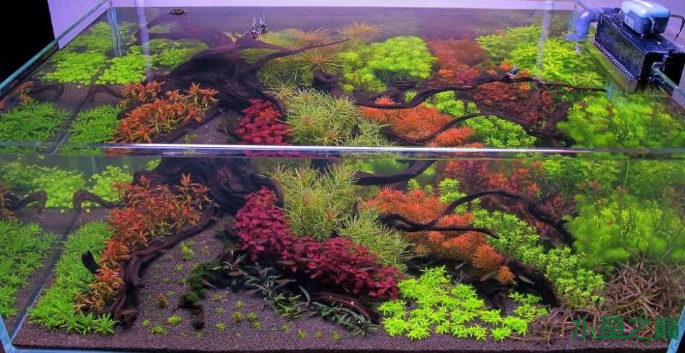 120cm荷兰式与德国式结合的水长沙虎鱼草造景 长沙龙鱼论坛 长沙龙鱼第228张