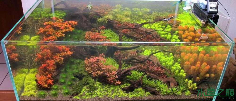 120cm荷兰式与德国式结合的水长沙虎鱼草造景 长沙龙鱼论坛 长沙龙鱼第233张