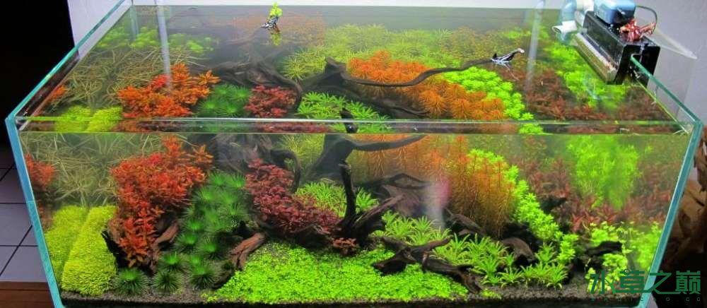 120cm荷兰式与德国式结合的水长沙虎鱼草造景 长沙龙鱼论坛 长沙龙鱼第234张