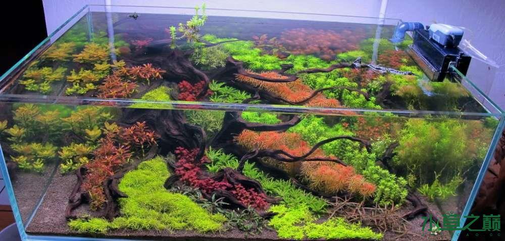 120cm荷兰式与德国式结合的水长沙虎鱼草造景 长沙龙鱼论坛 长沙龙鱼第244张