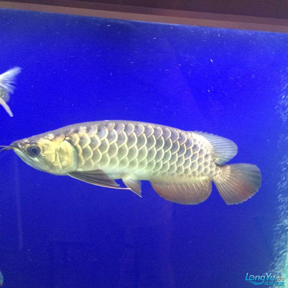 一群二货各种不淡定 吉林观赏鱼 吉林龙鱼第2张