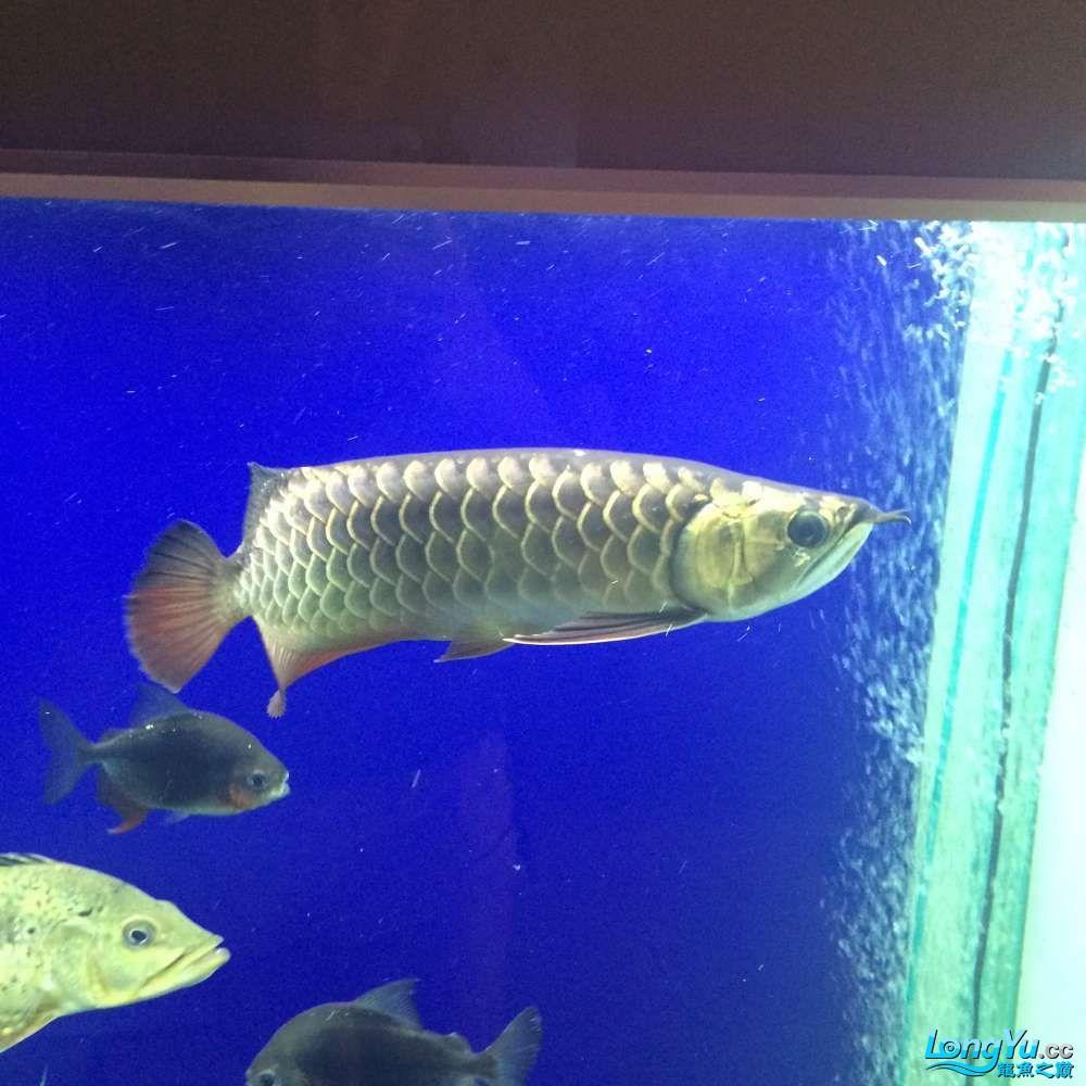 一群二货各种不淡定 吉林观赏鱼 吉林龙鱼第4张