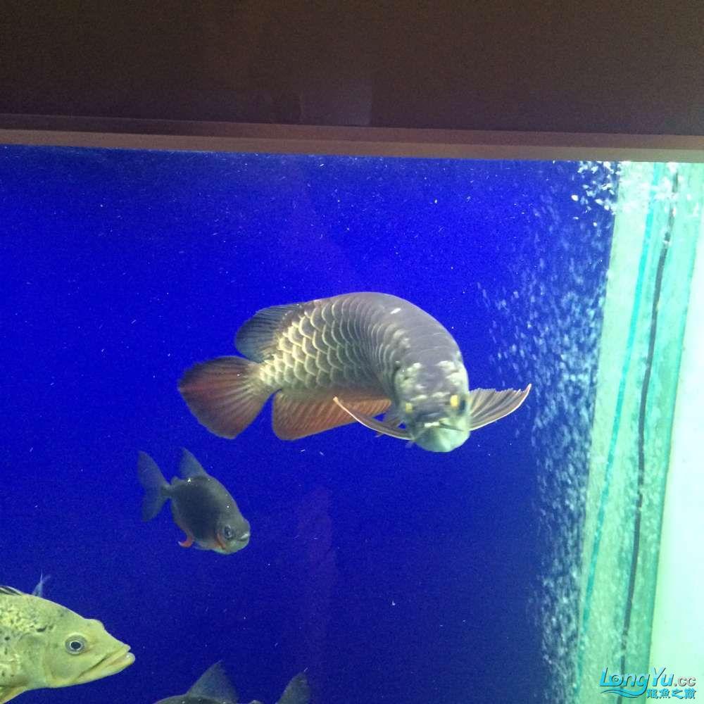 一群二货各种不淡定 吉林观赏鱼 吉林龙鱼第5张