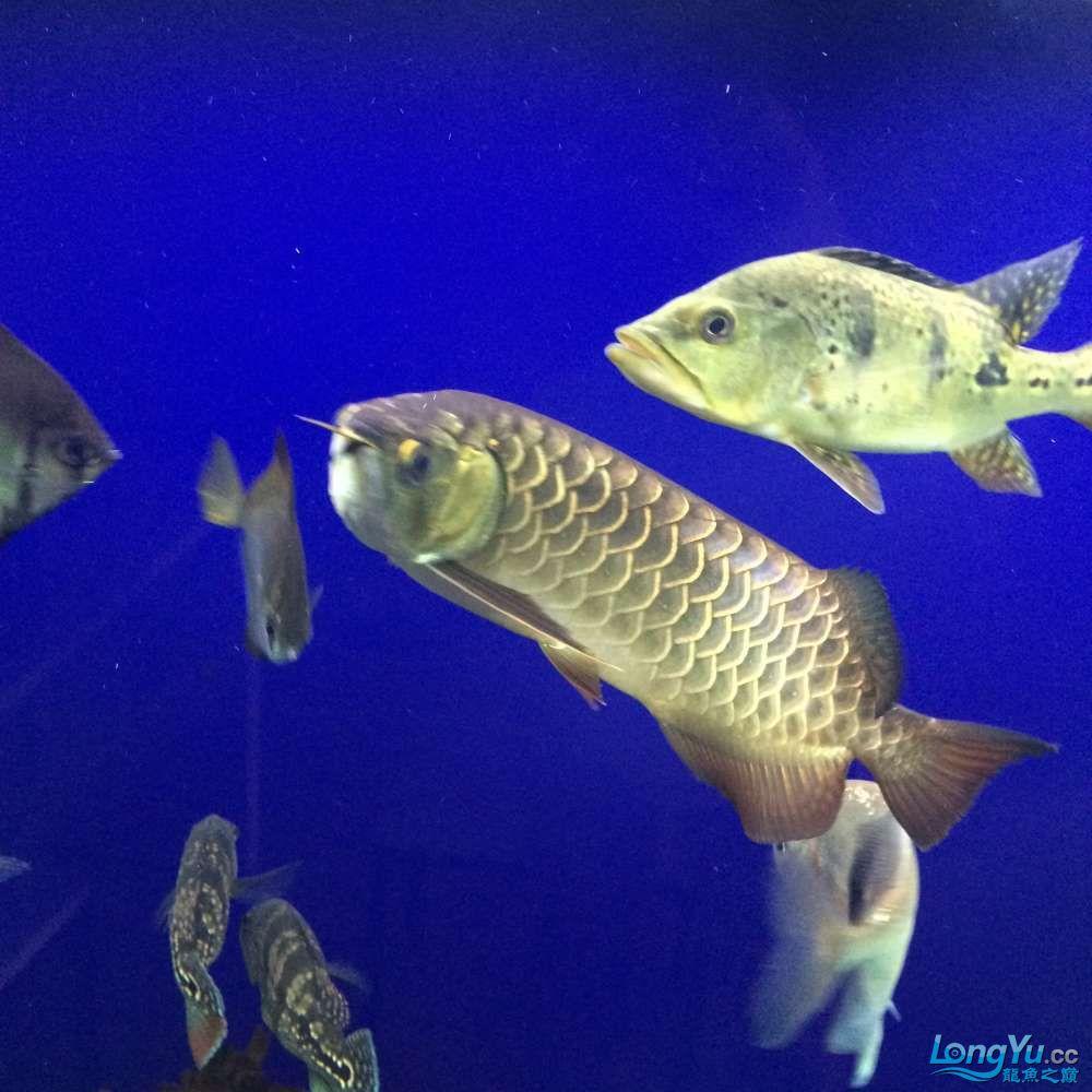 一群二货各种不淡定 吉林观赏鱼 吉林龙鱼第6张