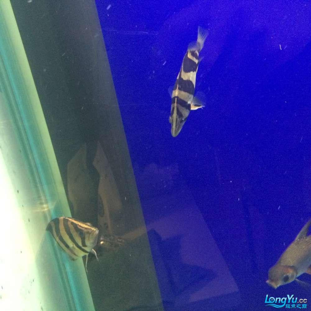 一群二货各种不淡定 吉林观赏鱼 吉林龙鱼第8张