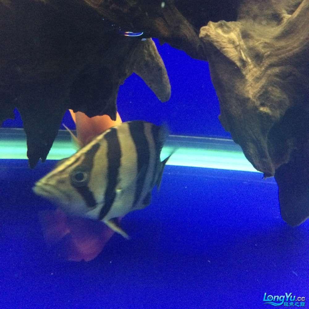 一群二货各种不淡定 吉林观赏鱼 吉林龙鱼第9张