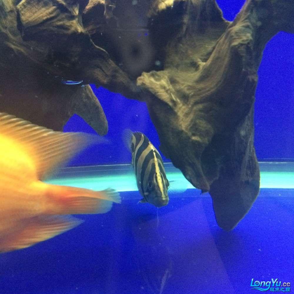 一群二货各种不淡定 吉林观赏鱼 吉林龙鱼第11张