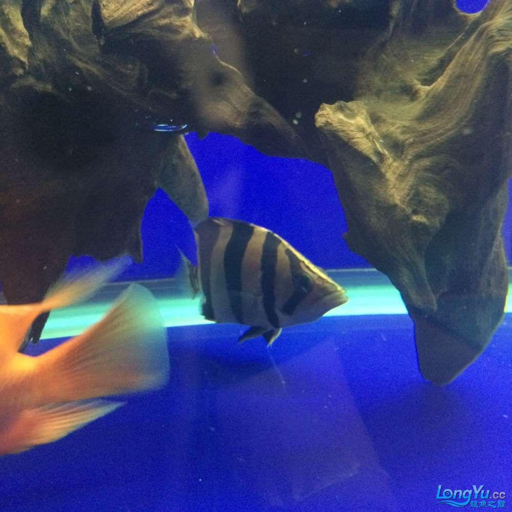 一群二货各种不淡定 吉林观赏鱼 吉林龙鱼第12张