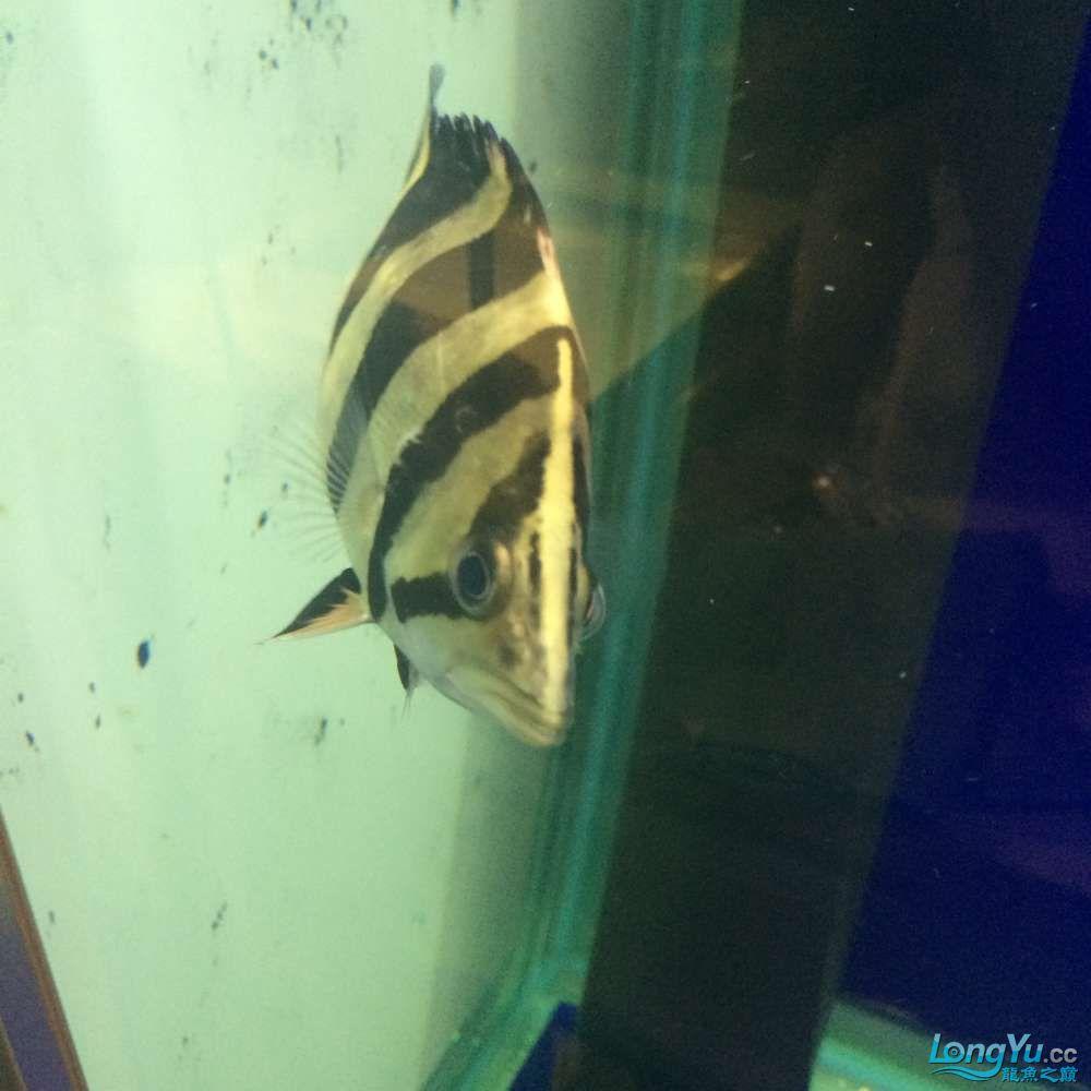 一群二货各种不淡定 吉林观赏鱼 吉林龙鱼第13张