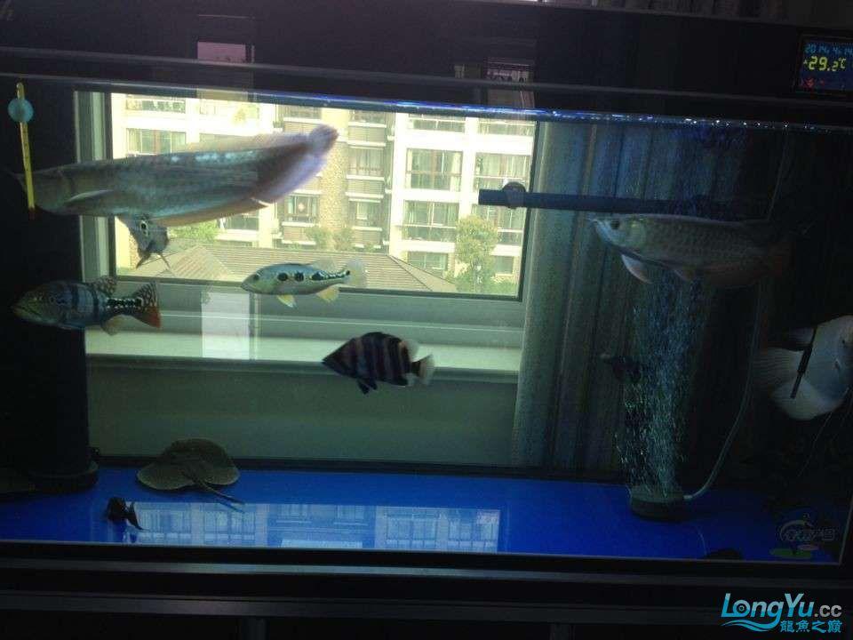 各种鱼.jpg
