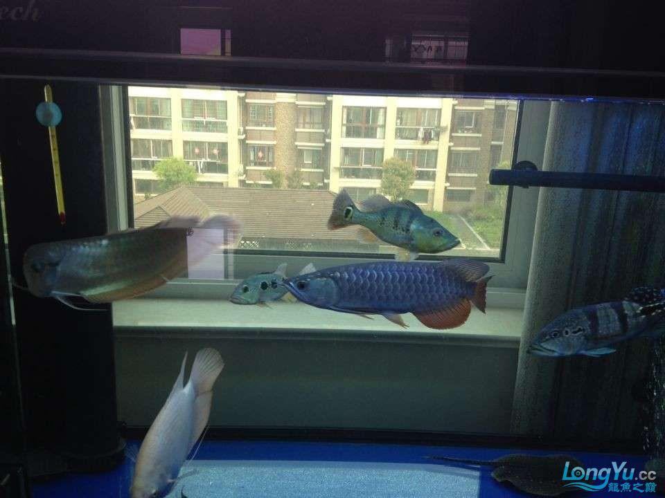 各种鱼1.jpg