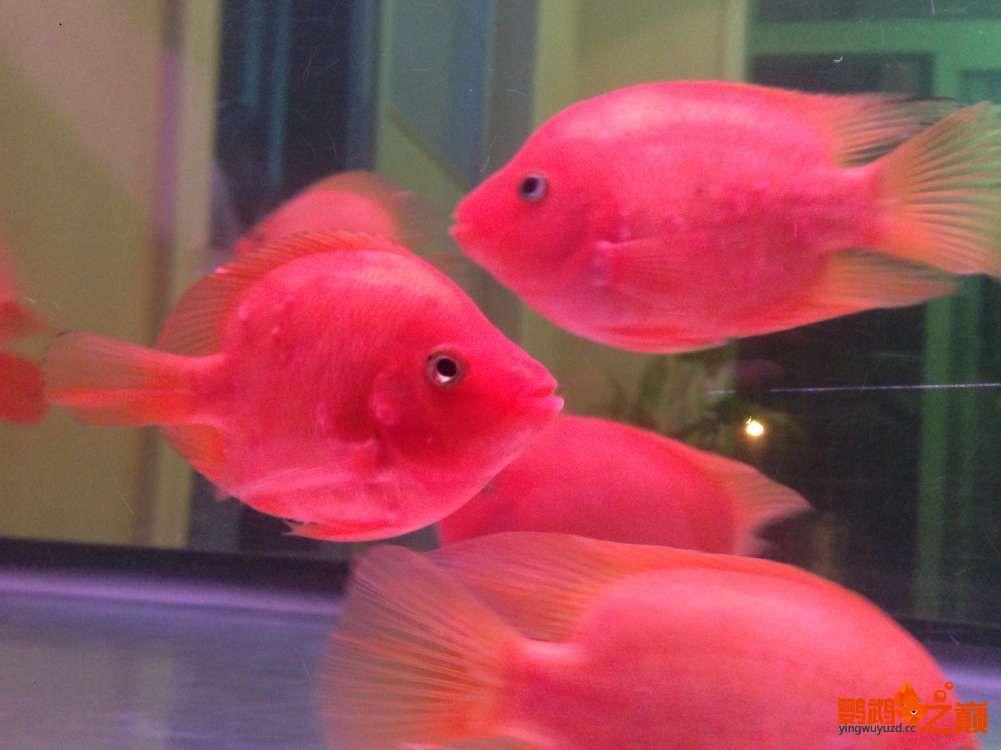 西宁观赏鱼金刚鹦鹉治疗帖 西宁龙鱼论坛 西宁龙鱼第2张