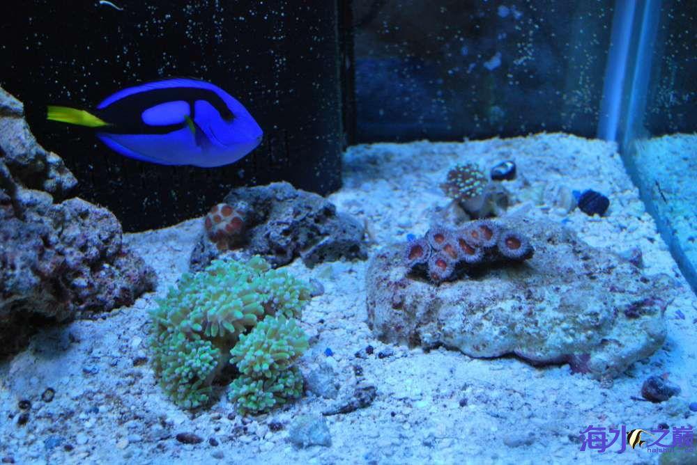 家里添置了海水缸就是生机勃勃啊 鞍山龙鱼论坛 鞍山龙鱼第2张