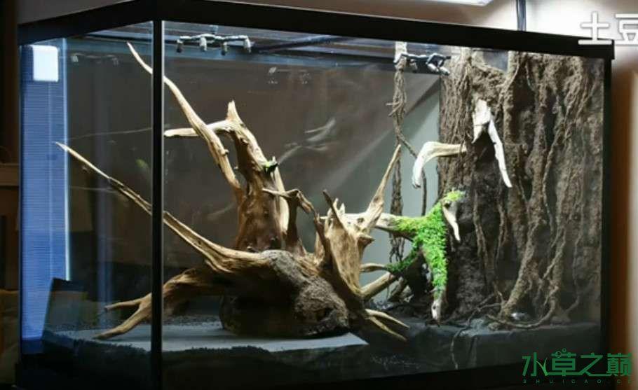 百花争艳的水陆缸【西安鱼缸订作】 西安观赏鱼信息 西安博特第2张