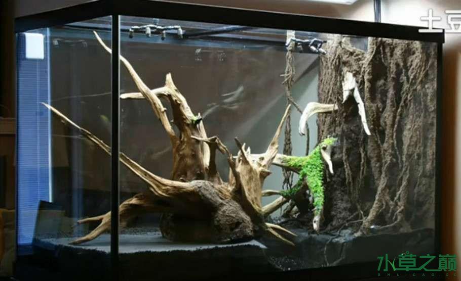 百花争艳的水陆缸【西安鱼缸订作】 西安观赏鱼信息 西安博特第3张
