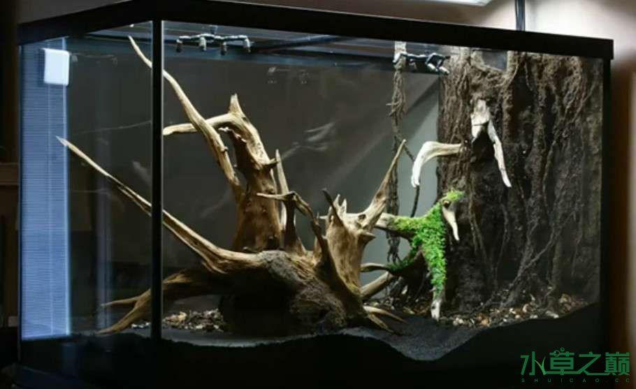 百花争艳的水陆缸【西安鱼缸订作】 西安观赏鱼信息 西安博特第8张