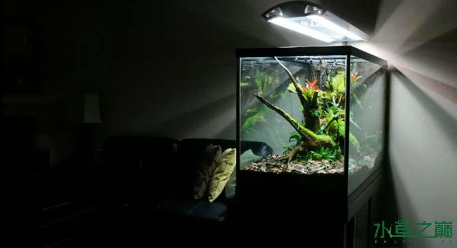 百花争艳的水陆缸【西安鱼缸订作】 西安观赏鱼信息 西安博特第24张