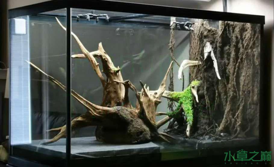 百花争艳的水陆缸【西安鱼缸订作】 西安观赏鱼信息 西安博特第4张