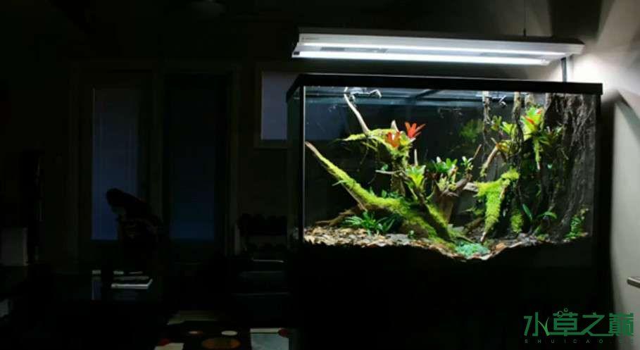 百花争艳的水陆缸【西安鱼缸订作】 西安观赏鱼信息 西安博特第26张
