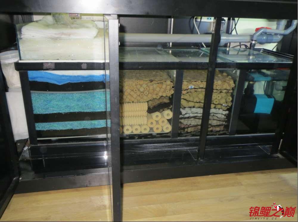 玩转鱼缸鱼池过滤系统的重要性 西宁观赏鱼 西宁龙鱼第2张