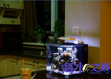 可以放在桌子上的小海缸 温州龙鱼论坛 温州龙鱼第3张
