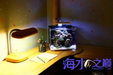 可以放在桌子上的小海缸 温州龙鱼论坛 温州龙鱼第4张