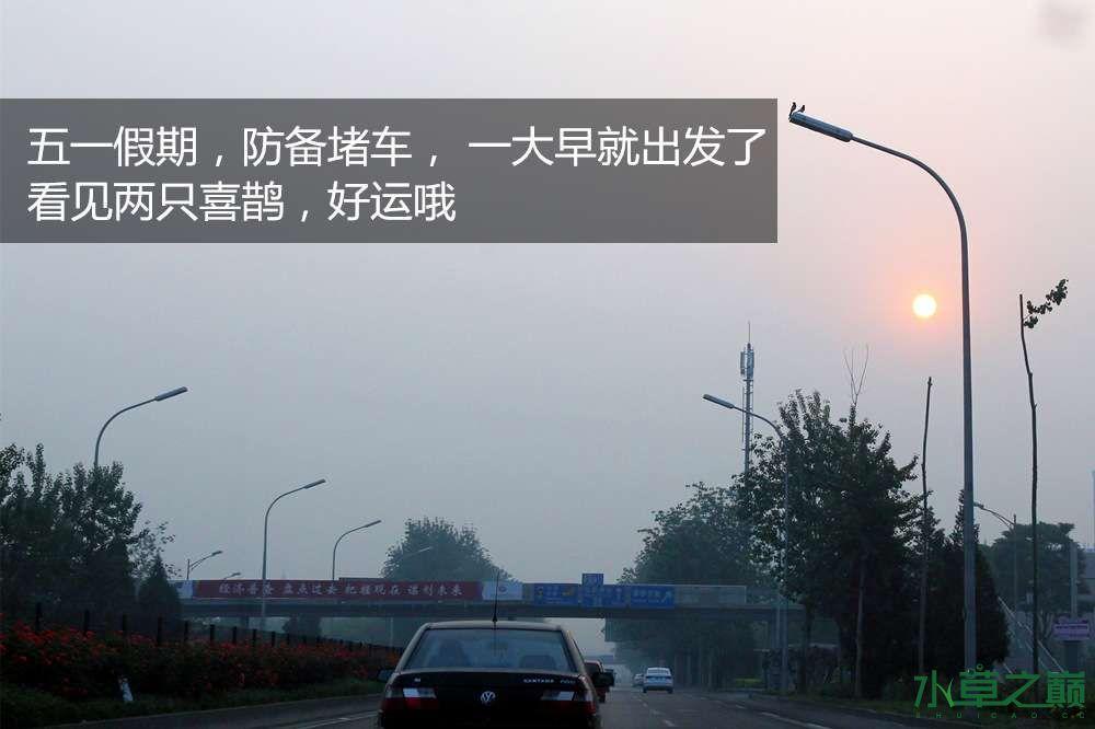 假期天津自由行142P呈现 南昌龙鱼论坛 南昌龙鱼第2张