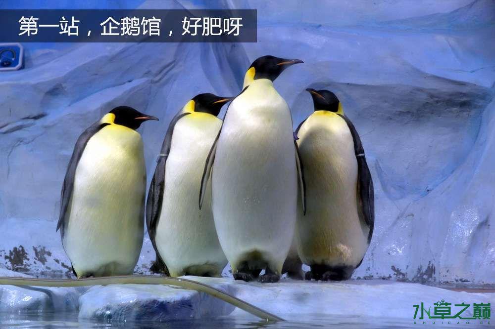 假期天津自由行142P呈现 南昌龙鱼论坛 南昌龙鱼第6张