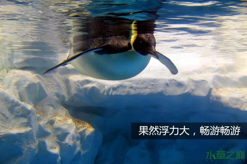 假期天津自由行142P呈现 南昌龙鱼论坛 南昌龙鱼第8张
